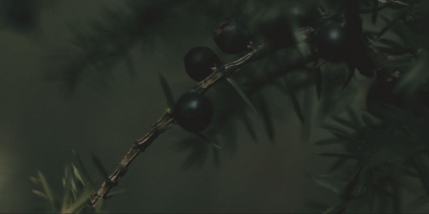 Archangel Distilleries slider - juniper background